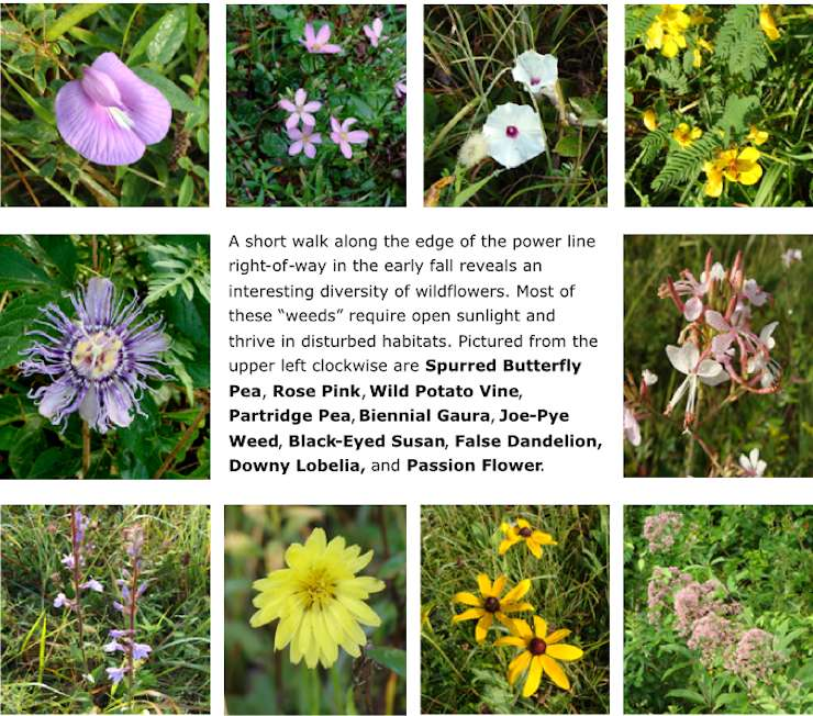 Fall Wildflowers 2014