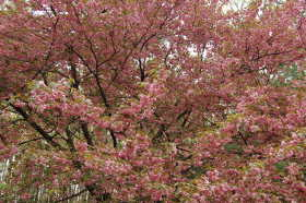 Flowering Ornamentals
