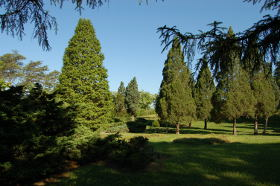 The Conifer Collection