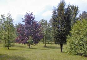 The Shade Tree Study