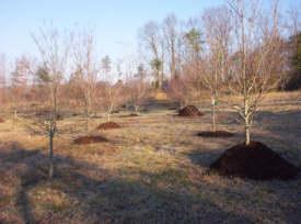 Urban Tree Mulching