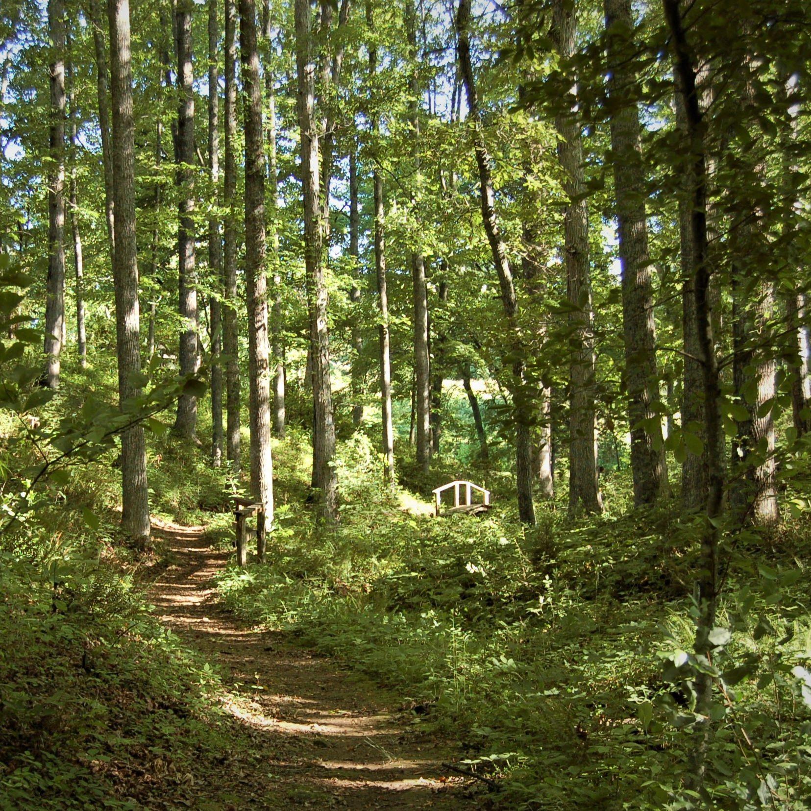 Arboretum Cover Tree Walk