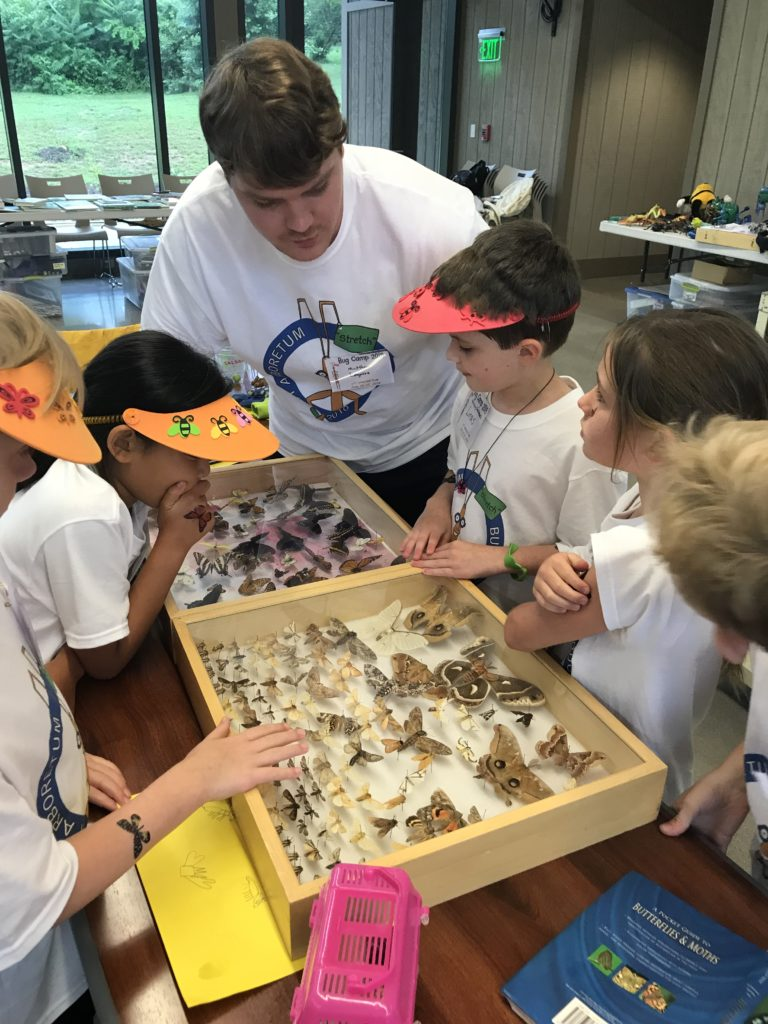 Campers looking at displays moth and butterfly collections