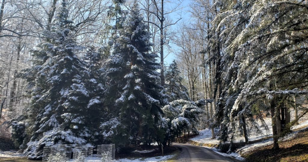 Snow on road and trees