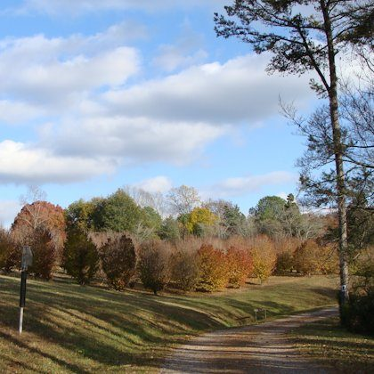 Arboretum Drive Trail