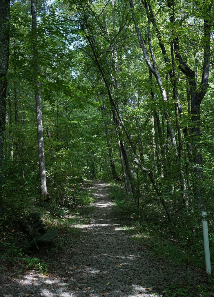 Backwoods trail