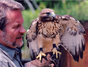 Stephen Lyn Bales with Red-tailed Hawk